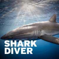 Shark Specialty